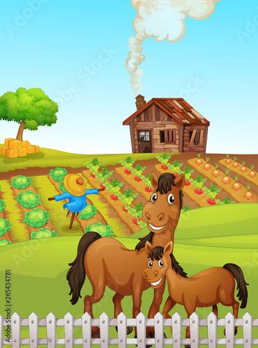Horse at the farmland