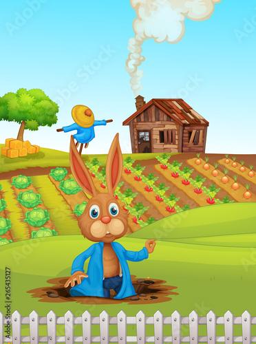 Rabbit at the farmland