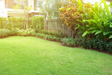 Garden Arrangement Landscaping With Green Grass Turf And Small Shrub Plant In Backyack Of Home Decor