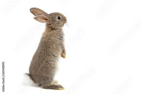 Foto Funny bunny or baby rabbit fur gray with long ears is standing for Easter Day on isolated white background