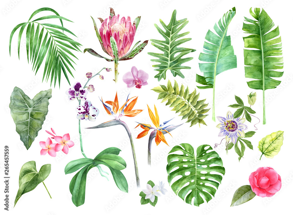 Tropical leaves and flowers collection.