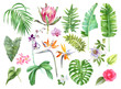 canvas print picture - Tropical leaves and flowers collection.