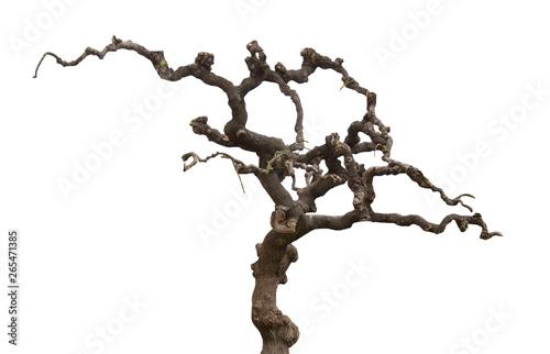 Valokuva Old tree isolated on white