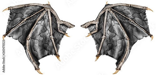 Valokuvatapetti Dark grey realistic dragon wings, isolated on white background