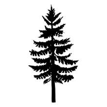 Vector Single Black Silhouette Of Spruce