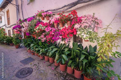 Adobe Stock & Typical spanish white walls street full of flowerpots on ...