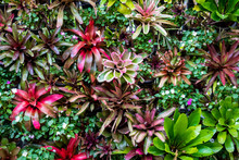Landscaping Using Bromeliad And Other Plant Species