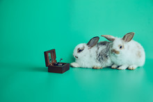 Two Rabbits Laying Down And Listening The Music Box On Green Background