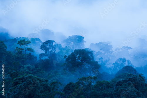 Foto  Aerial view of ancient tropical forest in the morning mist.