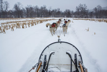 Huskies Drive Through The Snow On A Dog Sledding Trip In New England.