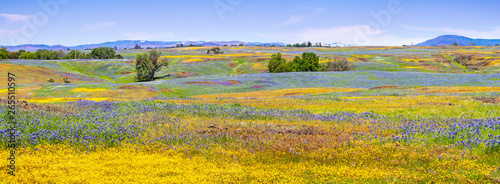 Fotografia Wildflowers blooming on the rocky soil of North Table Mountain Ecological Reserv