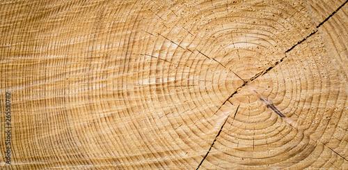 Fotografia  old wood texture