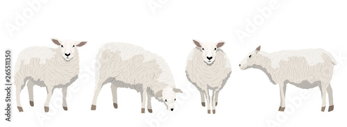 Carta da parati Set of white uncut sheep in various poses