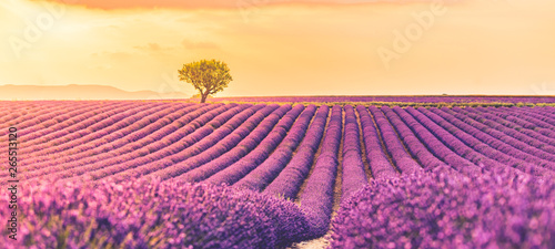 Panoramic view of French lavender field at sunset. Sunset over a violet lavender field in Provence, France, Valensole. Summer nature landscape. Beautiful summer nature scene