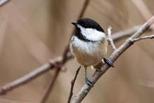 Wildlife Fauna Small Tiny Bird...