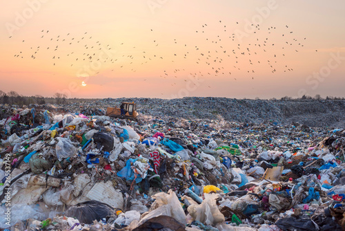 Photographie  Gulls over a pile of garbage.