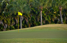 Palm Trees Growing By Golf Cou...