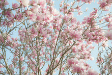 Low Angle View Of Flowering Tree Branches