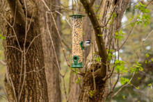 Black Capped Chickadee Sitting At Bird Feeder In Woods