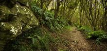 Dirt Path Through Lush Forest