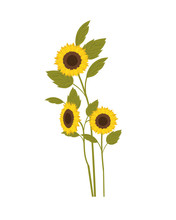 Pattern Of Sunflowers Isolated Icon