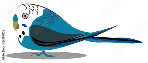 Fotografie, Obraz A small budgerigar bird vector or color illustration