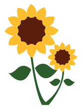 A Sunflower Plant With Two Flo...