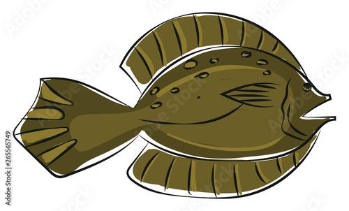 Clipart of a winter flounder fish/Pseudopleuronectes americanus vector or color Fototapete