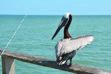 Pelican On Fishing Pier