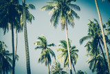 Coconut palm trees in sunset light. Vintage background. Retro toned poster. - 265571501