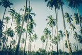 Coconut palm trees in sunset light. Vintage background. Retro toned poster. - 265571589