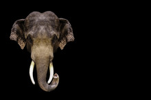 Thai Elephant On A Black Background