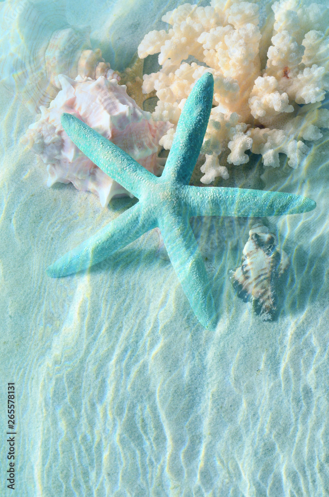 Fototapeta Seashell and starfish on the summer beach in sea water. Summer background.