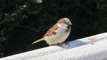 View Of Sparrow On The Wall