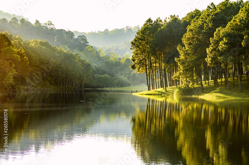 Beautiful landscape view of pine forest tree and lake view of reservoir.
