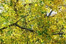 Blur Focus Beautiful Golden Autumn Leaves Yellow Green Plant Nature Backgound