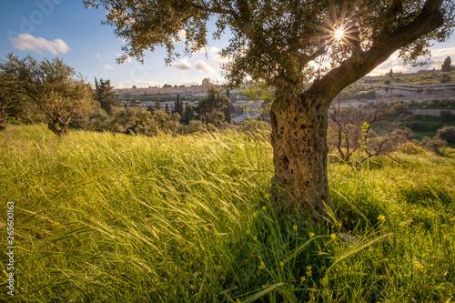 Cuadros en Lienzo Mount of Olives
