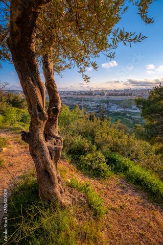 Fotomural Mount of Olives