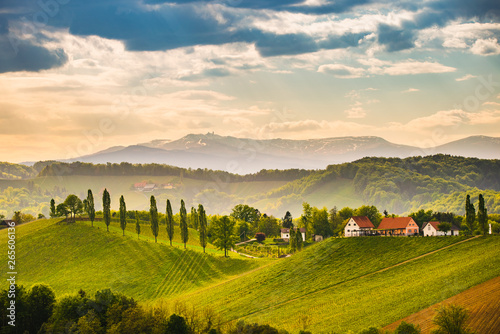 Wall Murals Beige Grape hills view from wine road in Austria. South styria vineyards landscape. Sulztal