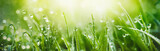Fototapeta Fototapety do łazienki - Juicy lush green grass on meadow with drops of water dew in morning light in spring summer outdoors close-up macro, panorama. Beautiful artistic image of purity and freshness of nature, copy space.