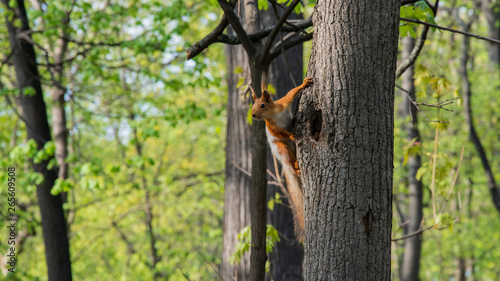 Fotobehang Eekhoorn Squirrel on a tree