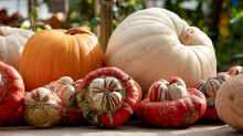 Orange Gourds / Squash / Pumpk...