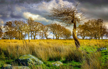 Thorn Tree In Landscape With T...