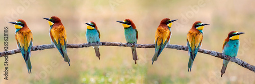 Leinwand Poster Meeting of four bee-eaters