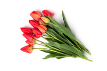 Red Tulips Isolated On White B...
