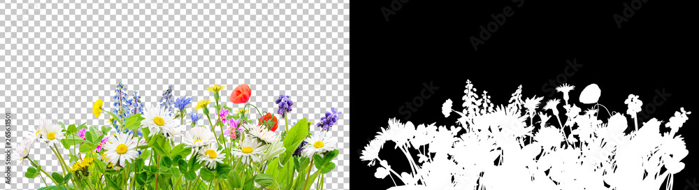 Fototapeta spring grass and daisy wildflowers isolated background