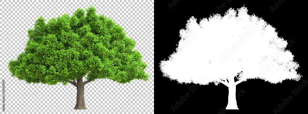 Fototapety, obrazy: a tree isolated with high detailed leaves with clipping path and alpha channel