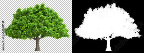 Foto  a tree isolated with high detailed leaves with clipping path and alpha channel