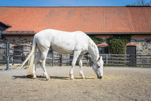 White Speckled Horse Standing ...