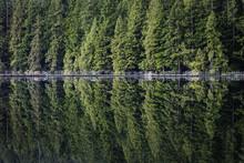 Floating Footbridge Reflecting...